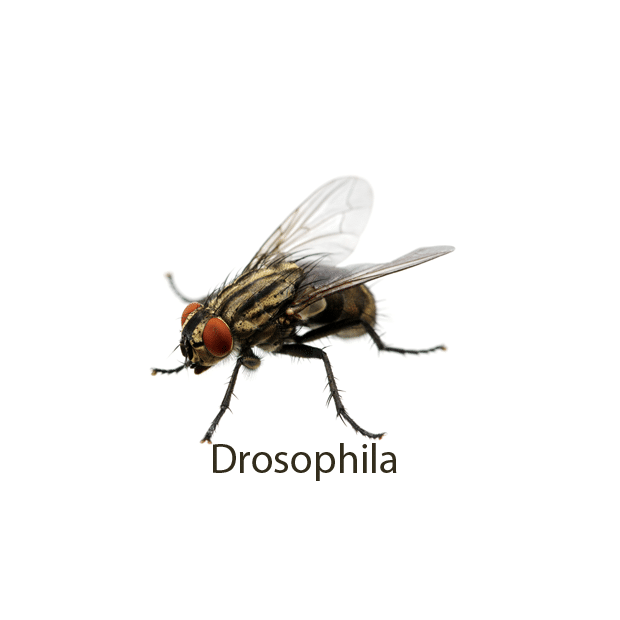 Percival Supports Nobel Prize Winning Drosophila Research